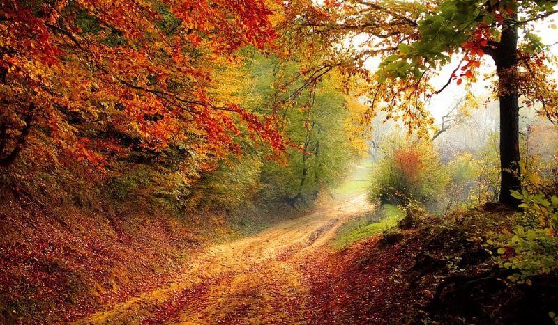 Photo of 5 Fun Autumn Activities