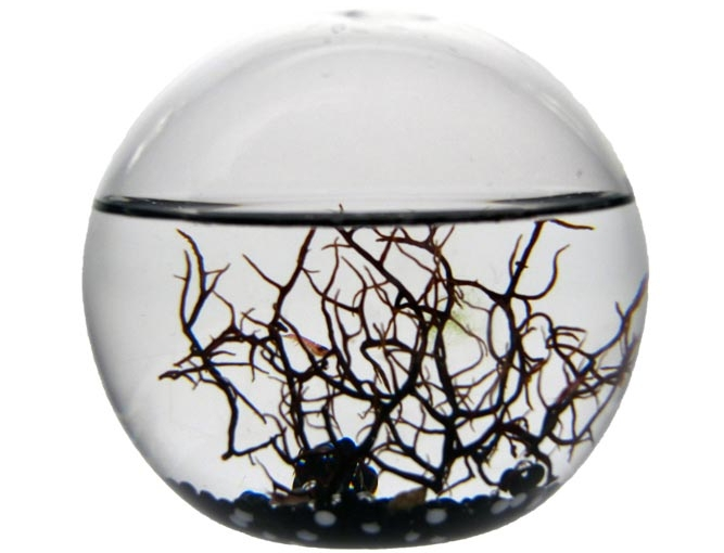 Photo of Small EcoSphere Review