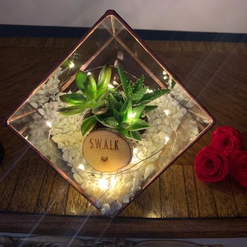 Photo of The Urban Botanist Valentine's Mini Copper Cube Terrarium Review
