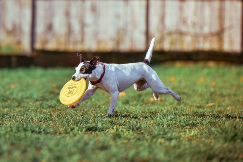 Photo of 3 of the Best Dog Parks in Sheffield