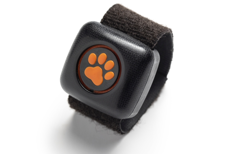 Photo of PitPat Dog Activity Monitor Review