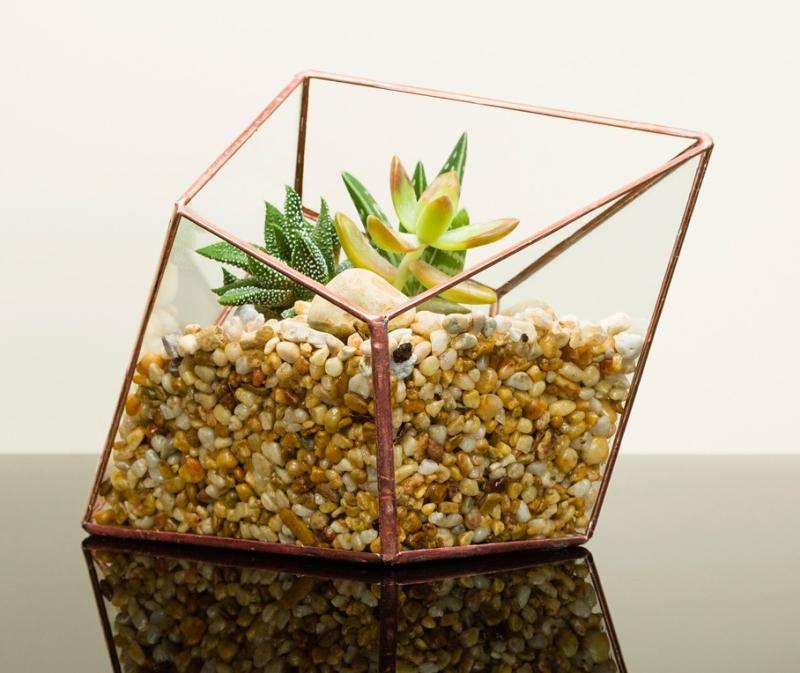 Photo of The Urban Botanist Diamond Terrarium Review