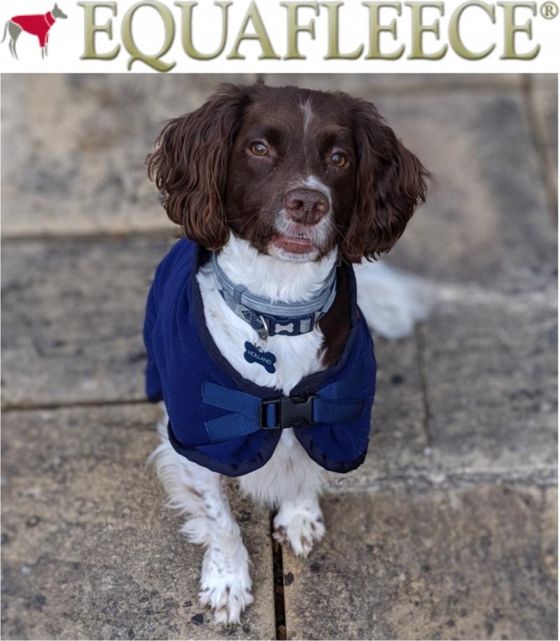 Photo of Equafleece Dog Coat Review