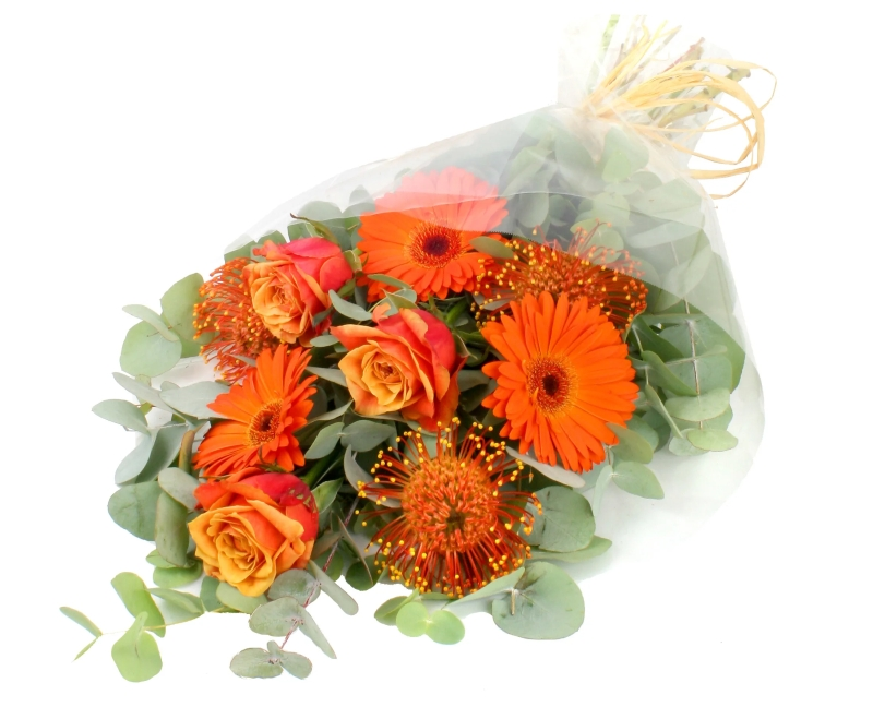 Photo of Serenata Halloween Themed Flowers Review