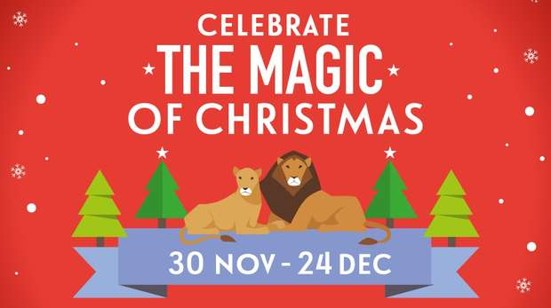 Photo of Celebrate the Magic of Christmas at ZSL London Zoo Review