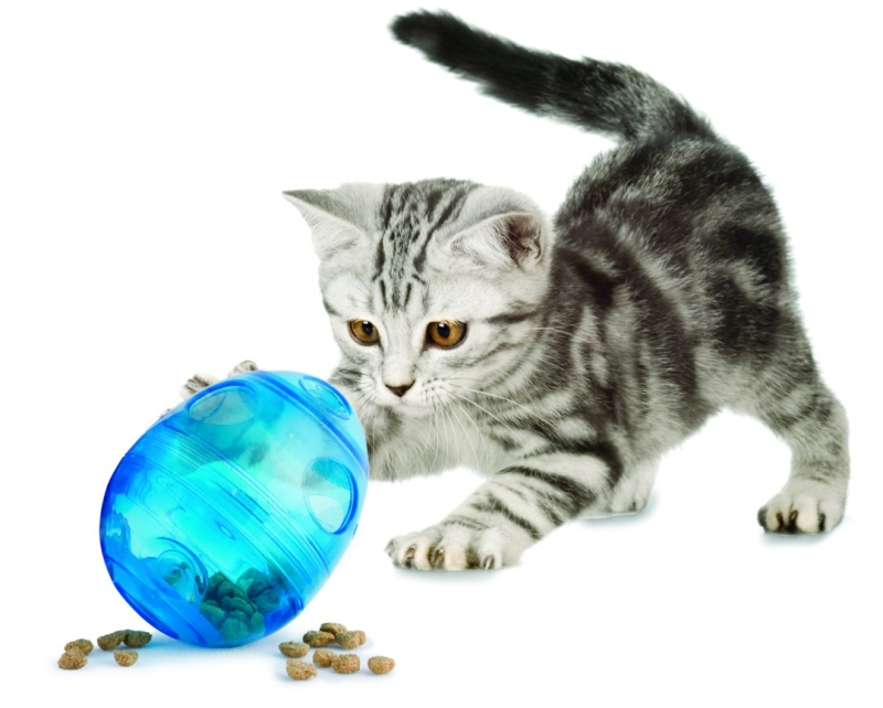 Photo of PetSafe FunKitty Egg-Cersizer Cat Toy Review
