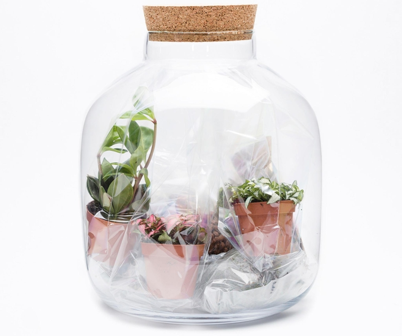 Photo of The Urban Botanist DIY Grande Ecosystem Kit Review