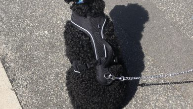 Photo of PetSafe Easysport Harness