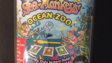 Photo of Sea Monkeys Ocean-Zoo Review
