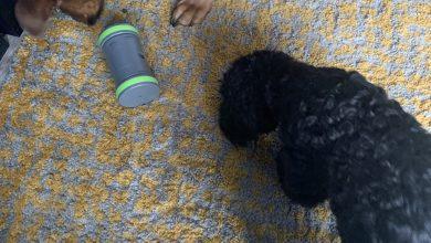 Photo of PetSafe 'Kibble Chase' Roaming Dispenser Review